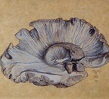 Human Brain Left hemisphere by RangerRoger