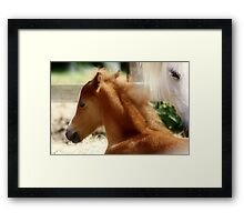 1.6.2013: Foal and Mare Framed Print