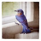 bluebird in the kitchen by Kelly Letky