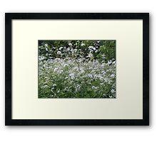 White frothy flowers Framed Print