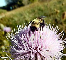 Thistle Bee by Keala