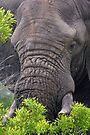 Content by Explorations Africa Dan MacKenzie