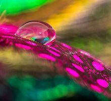Feather Drop by Debbie Moore