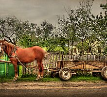 Country Life by Evelina Kremsdorf
