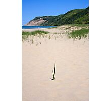 Lone Reed with Empire Bluff Beyond Photographic Print
