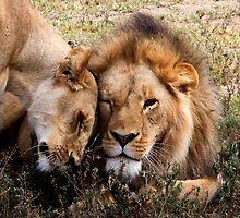 Open affection  2  -   ( Lion – Panthera leo )  Lake Nadutu Southern Serengeti  Tanzania by john  Lenagan