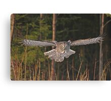 Great Gray on the way Canvas Print