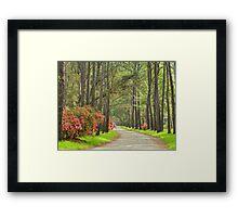 Plantation Road Framed Print
