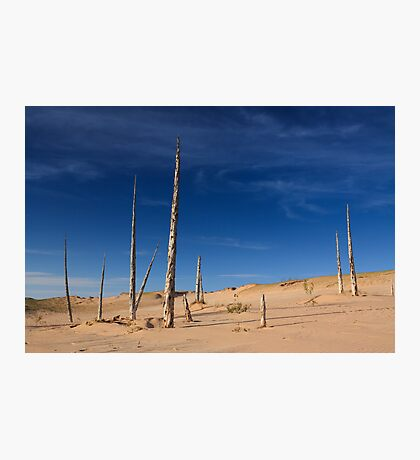 Ghost Forest, Sleeping Bear Dunes National Lakeshore Photographic Print