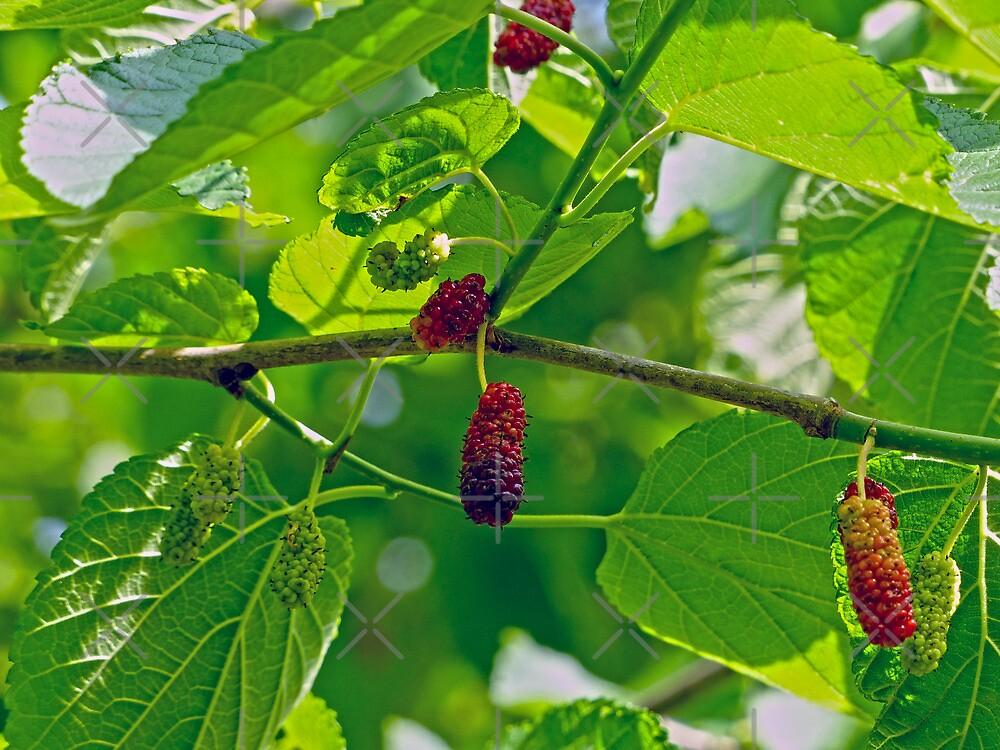 Mulberries  by Susan S. Kline