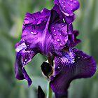 """Purple Rain"" by Gail Jones"