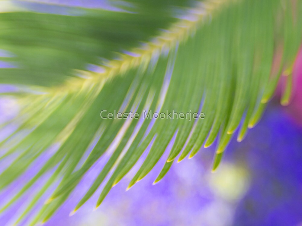 Soft breeze by Celeste Mookherjee