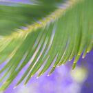 Soft breeze by Celeste Mookherjee