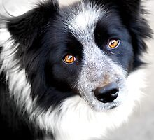 Pet Portrait - Chicane by Kimberly Caldwell