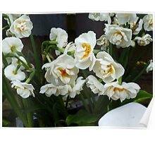 SMELL THE HEAVENLY SCENT OF THESE NARCISSI Poster