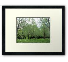 lovely willow trees Framed Print