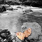 Glenbride Burn with Leaves by George Crawford