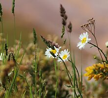 Wild Flowers by Theresa Selley
