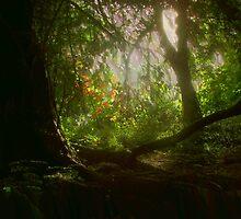 Blaise Woods by Matt Sibthorpe