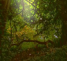 Forest Light by Matt Sibthorpe