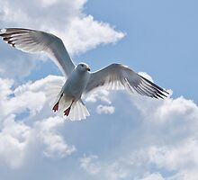 On The Wings Of A Gull by Susie Peek