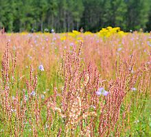 Colorful Field by Dawne Dunton