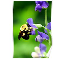 Bee on False Indigo Poster