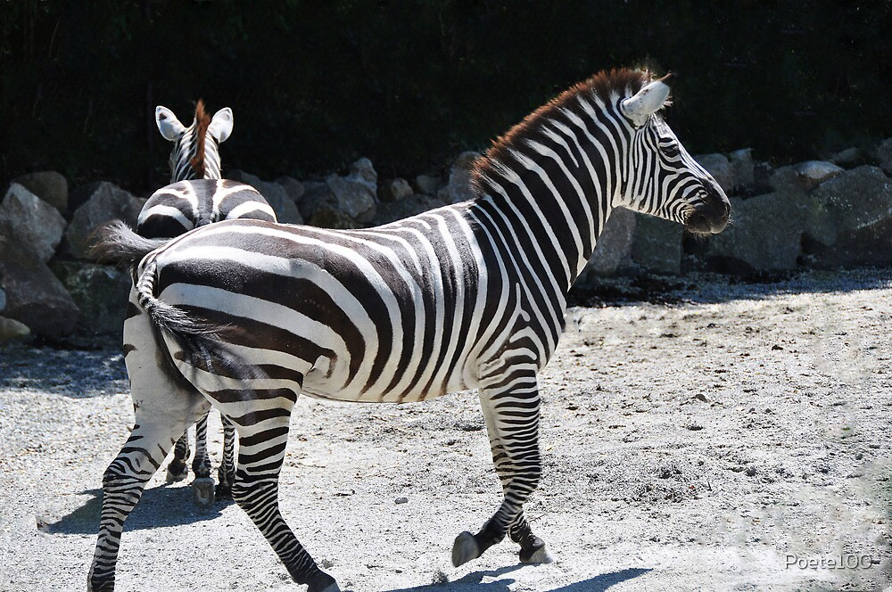 'Stripes' style by Poete100