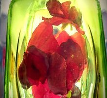 Encased in Glass. by Livvy Young