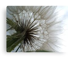Dandelion to the Sky Canvas Print