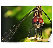 Spring Dragonfly Poster