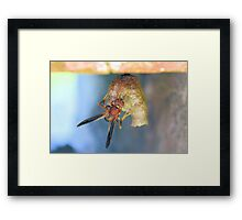 Out On My Own Framed Print