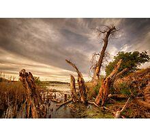 Swamp Alter Photographic Print