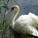 White Swan by quiltmaker