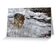Kootenay Wolf Greeting Card