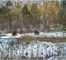Stream in Winter by firerabbit87
