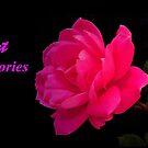 SWEET MEMORIES~ by RoseMarie747