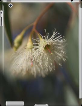 White Eucalyptus by Joy Watson