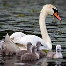 Teaching The Babies to Forage For Food by Mikell Herrick