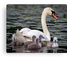 Teaching The Babies to Forage For Food Canvas Print