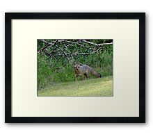 Sly as Framed Print