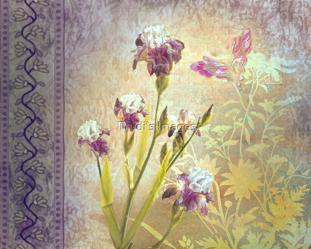 Iris by Trudi's Images