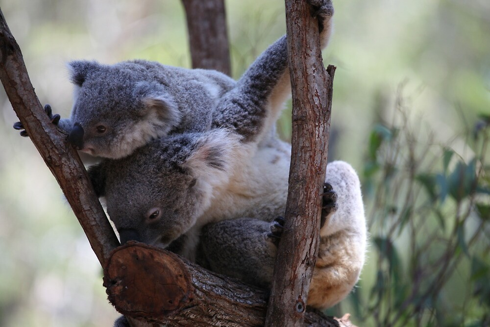 Mum - this tree smells of eucalyptus too! by v-something