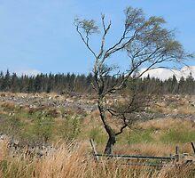 Desolate forest  by Adam Mann