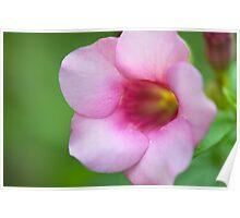 Pretty Flower - Singapore Botanical Garden  Poster