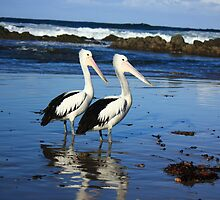 Pair of Pelicans by Carol James