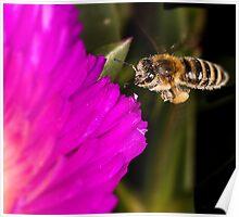 Dam pollen Poster