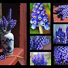 Collection of Grapy Hyacinths by sherln