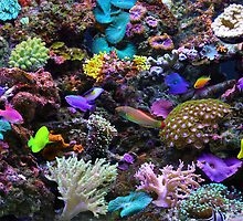 The Great Barrier Reef by Steve Bass