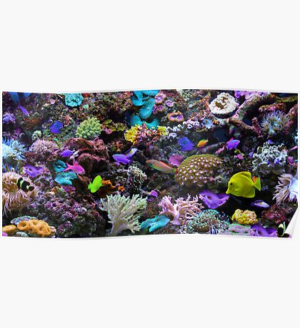 The Great Barrier Reef Poster